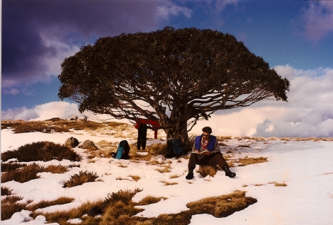 Mt Stirling, Victoria - ancient snow gum