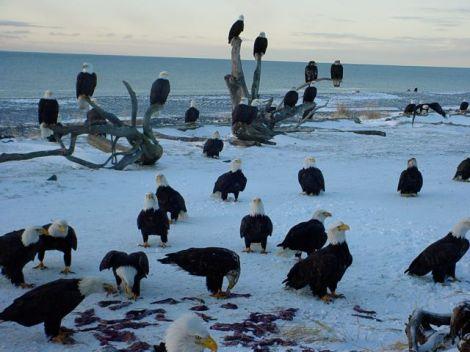 Eagles 3