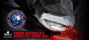 Operation Apex Harmony Sea Shepherd Australia -- Earth Dr Reese Halter
